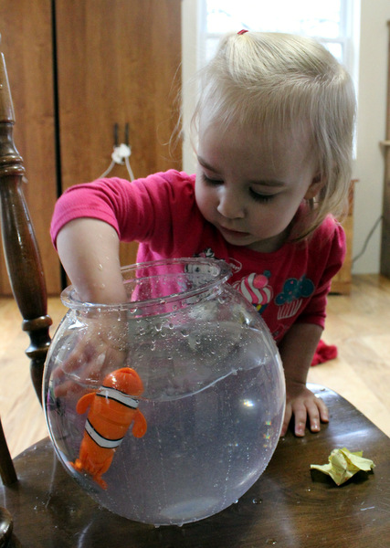 Toddler girl with hands in water in fishbowl